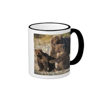 Oso de Brown, oso grizzly, cerda con los cachorros Tazas