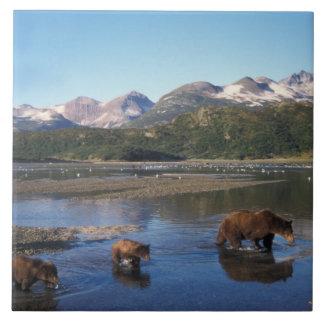 Oso de Brown, oso grizzly, cerda y cachorros adent Azulejo Cuadrado Grande