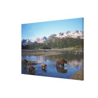 Oso de Brown oso grizzly cerda y cachorros adent Lienzo Envuelto Para Galerías