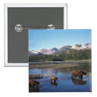 Oso de Brown, oso grizzly, cerda y cachorros adent Pin Cuadrada 5 Cm