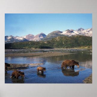 Oso de Brown, oso grizzly, cerda y cachorros adent Póster