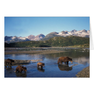 Oso de Brown oso grizzly cerda y cachorros adent Tarjetón