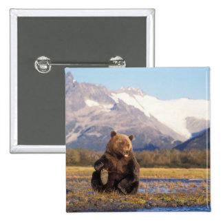 Oso de Brown, oso grizzly, en cauce del río con Pin Cuadrada 5 Cm
