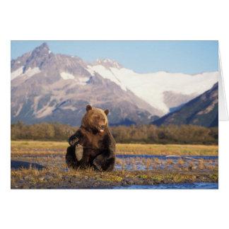 Oso de Brown oso grizzly en cauce del río con Tarjetas