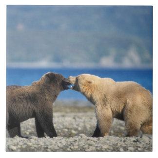 Oso de Brown, oso grizzly, juego en la playa, Azulejo Cuadrado Grande