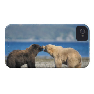 Oso de Brown, oso grizzly, juego en la playa, Case-Mate iPhone 4 Cárcasas