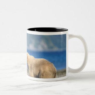 Oso de Brown, oso grizzly, juego en la playa, Taza De Café De Dos Colores