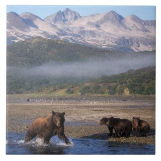 Oso de Brown, oso grizzly, pesca de la cerda con l Azulejo Cuadrado Grande