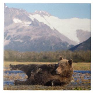 Oso de Brown, oso grizzly que estira en su parte p Azulejo Cuadrado Grande