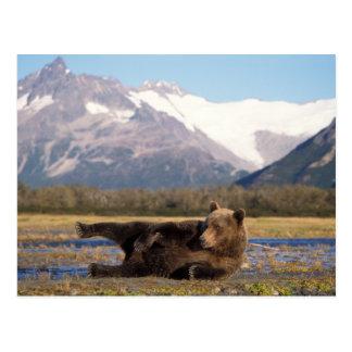 Oso de Brown, oso grizzly que estira en su parte Postal