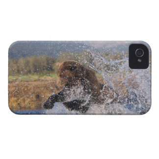 Oso de Brown, oso grizzly, salmones rosados de cog iPhone 4 Coberturas