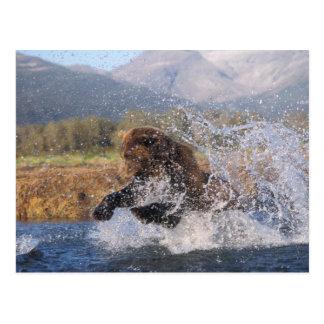 Oso de Brown, oso grizzly, salmones rosados de Postal