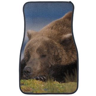 Oso de Brown, oso grizzly, tomando una siesta, Alfombrilla De Auto