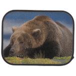 Oso de Brown, oso grizzly, tomando una siesta, Kat Alfombrilla De Auto