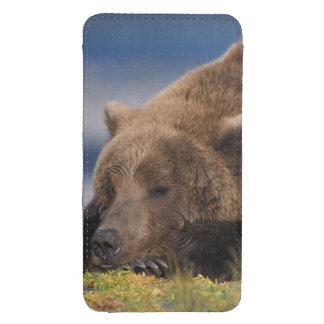 Oso de Brown oso grizzly tomando una siesta Kat