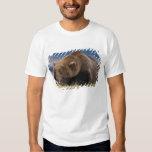 Oso de Brown, oso grizzly, tomando una siesta, Playera