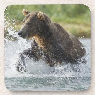 Oso de Brown que persigue salmones en el río Posavaso