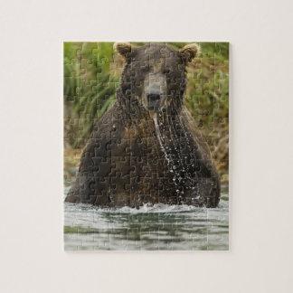 Oso de Brown, varón, pescando para los salmones Puzzle Con Fotos