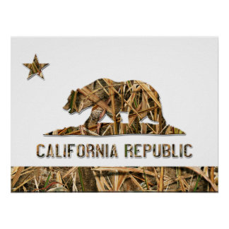 Oso de Camo California Poster