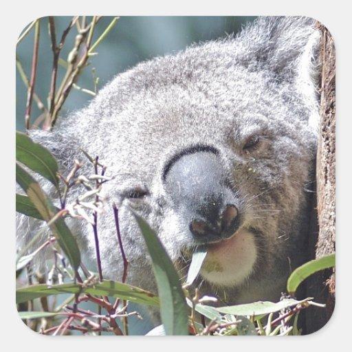 Oso de koala calcomanía cuadrada personalizada