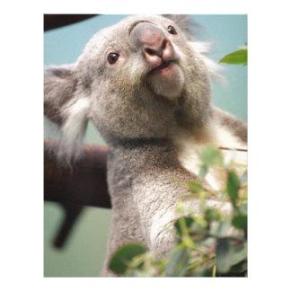 Oso de koala curioso membrete