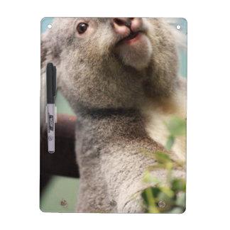 Oso de koala curioso pizarra
