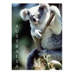 Oso de koala de Australia Tarjetas Postales