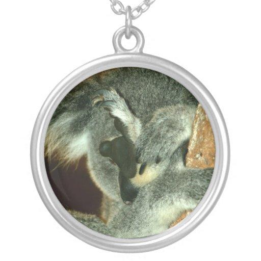 Oso de koala, durmiendo con la pata sobre cara grimpola