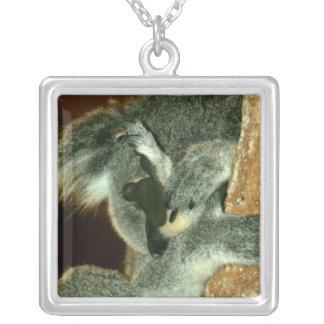 Oso de koala, durmiendo con la pata sobre cara collar plateado