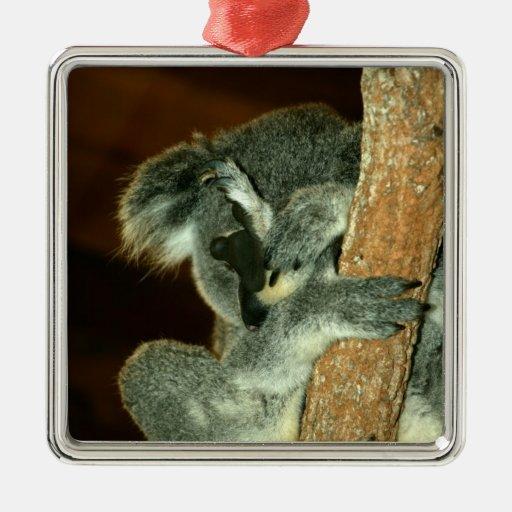 Oso de koala, durmiendo con la pata sobre cara ornamentos de navidad