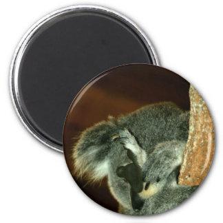 Oso de koala, durmiendo con la pata sobre cara imán redondo 5 cm
