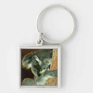 Oso de koala, durmiendo con la pata sobre cara llavero personalizado