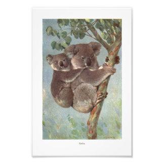 Oso de koala en el ejemplo del árbol cojinete