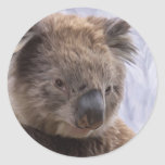 Oso de koala etiquetas redondas