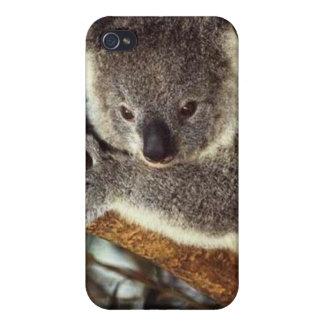 Oso de koala iPhone 4/4S carcasa