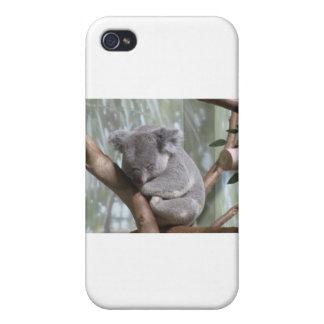 oso de koala iPhone 4 protector