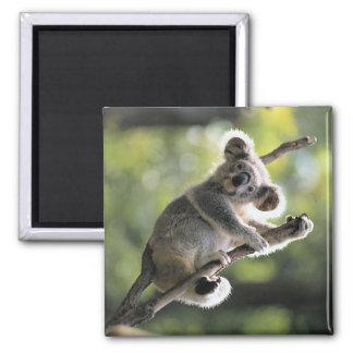 Oso de koala imán cuadrado