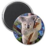 Oso de koala imán redondo 5 cm