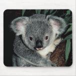 Oso de koala lindo alfombrilla de ratón