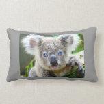 Oso de koala lindo almohadas