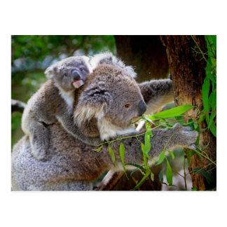 Oso de koala lindo del bebé con la mamá en un árbo postales