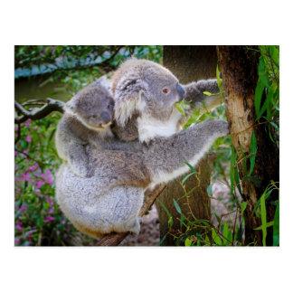 Oso de koala lindo del bebé con la mamá en un árbo tarjetas postales