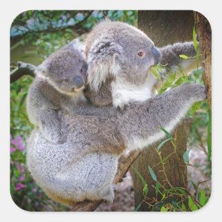 Oso de koala lindo del bebé con la mamá en un pegatina cuadrada