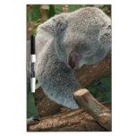 Oso de koala lindo el dormir pizarras