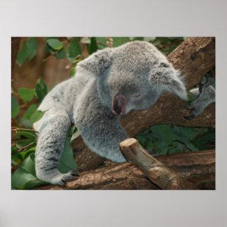 Oso de koala lindo el dormir póster