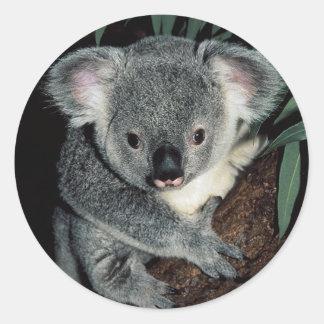 Oso de koala lindo etiquetas redondas