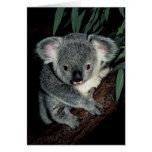 Oso de koala lindo felicitaciones