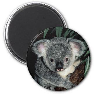 Oso de koala lindo imán redondo 5 cm