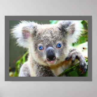 Oso de koala lindo poster