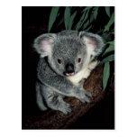 Oso de koala lindo postal
